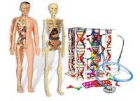Clementoni Science / Play - Lidské tělo